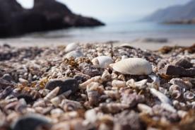 Praia da tortuga